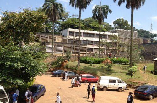 Article : Marijuana : la nouvelle bévue de certains étudiants tchadiens au Cameroun
